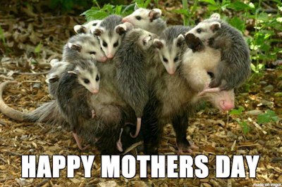 """Photo of a mother possum with 9 babies hanging on her back and head. The text says """"Happy Mother's Day."""""""