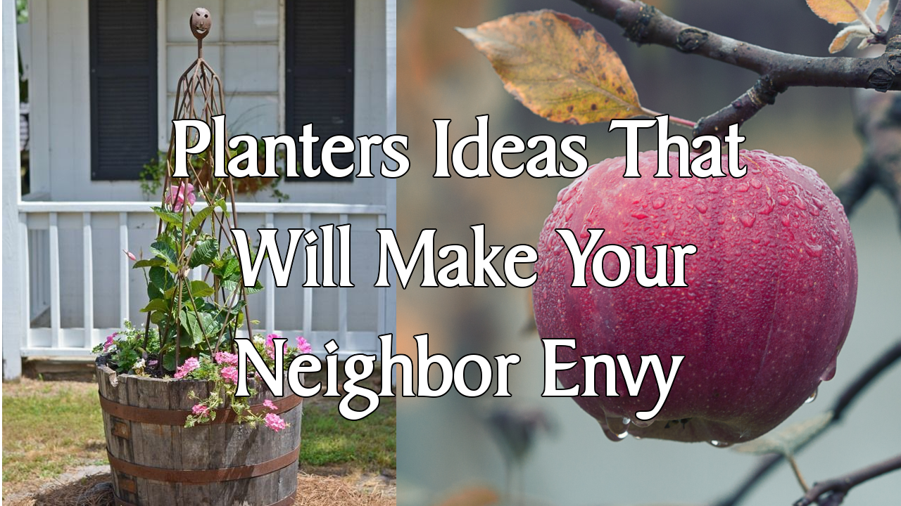 5 Planters Ideas That Will Make Your Neighbor Envy