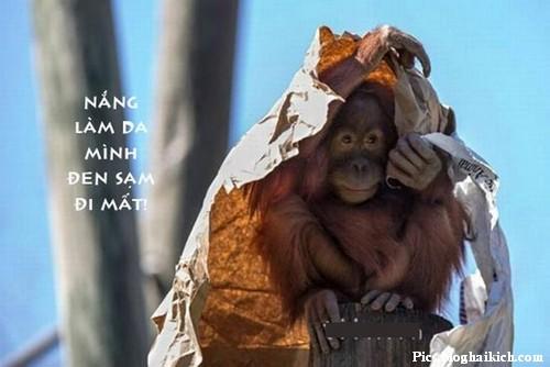 Xả Stress với hình chú khỉ vui