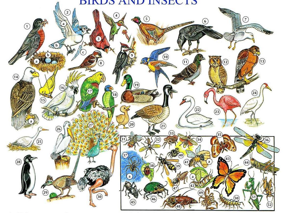 Nama Nama Burung Dan Serangga Dalam Bahasa Inggris