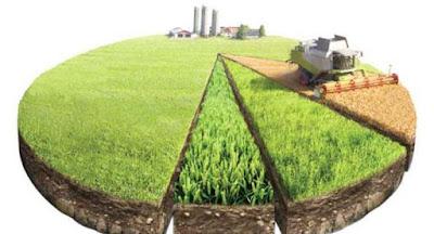Набув чинності закон про продаж землі сільгосппризначення