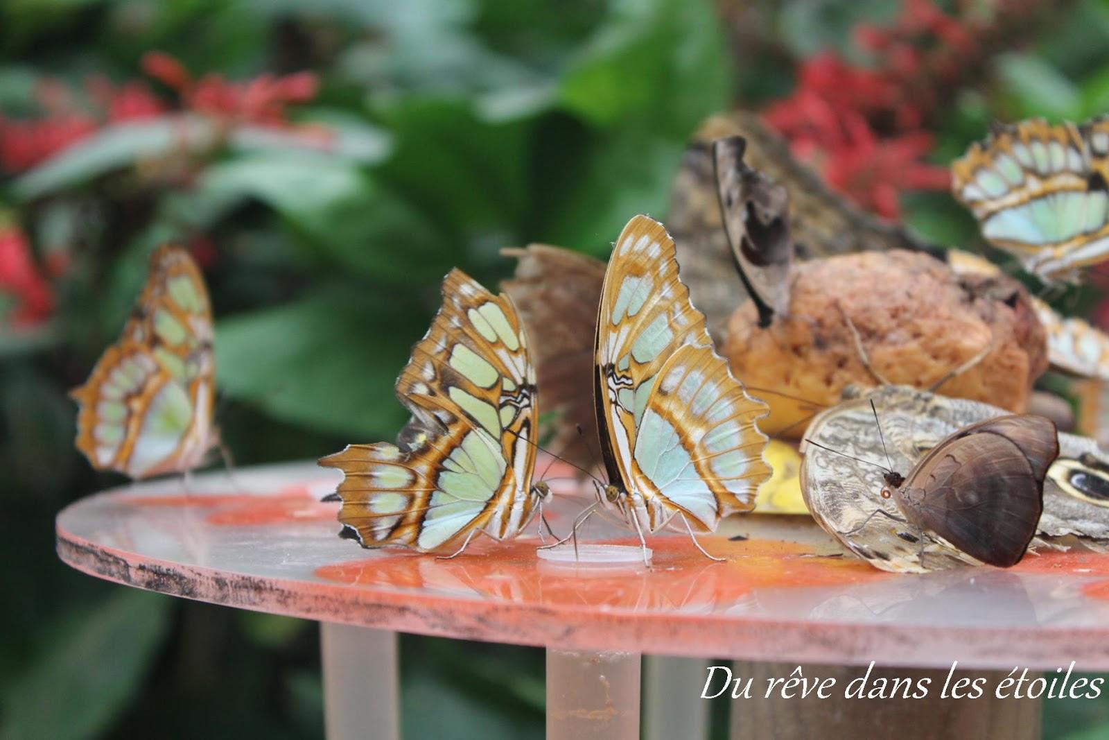 La serre papillons sortie en yvelines du r ve dans for Sortie en famille yvelines