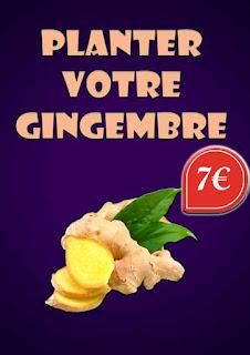 Planter votre gingembre