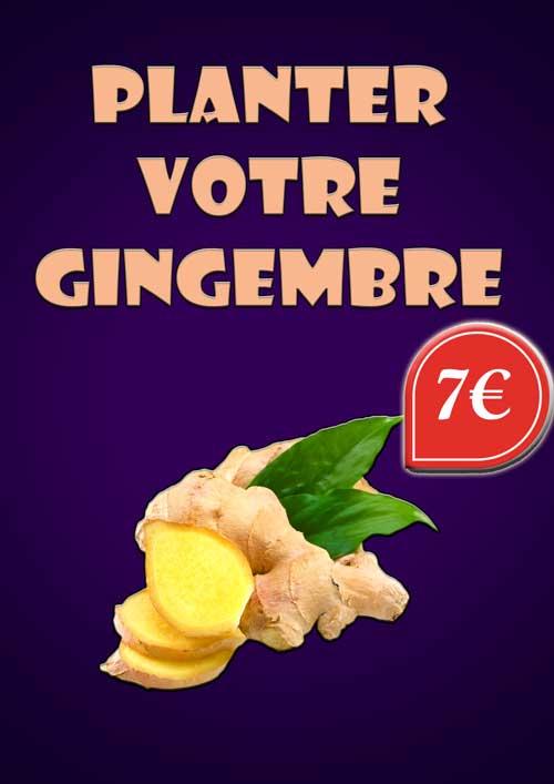 Planter votre gingembre (7 euros)