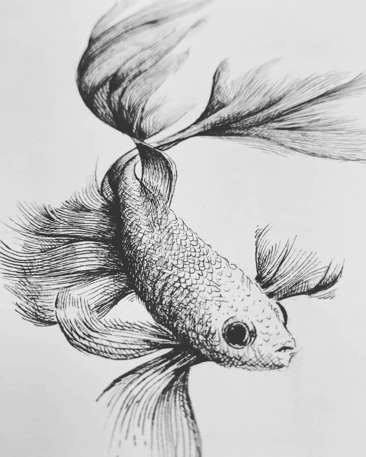 08-Lovely-fish-www-designstack-co