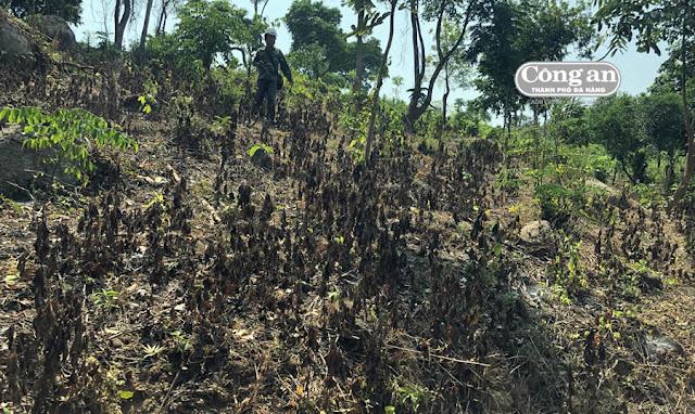 Quảng Ngãi Sử dụng thuốc diệt cỏ làm ô nhiễm nguồn nước, nguy hại môi trường