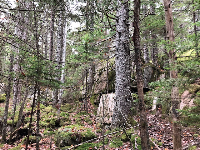 boulders in a forest