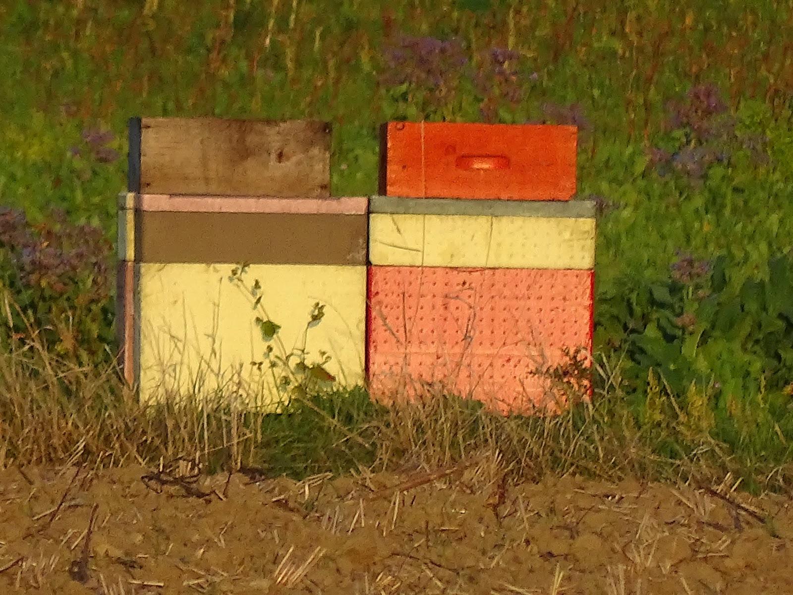 abeillehautdefrancecampagnehalluin