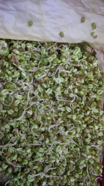 picture of bean sprouts growing, how are bean sprouts grown commercially, growing soybean sprouts at home, how to grow bean sprouts from lentils, bean sprouts pronunciation, how to grow bean sprouts on a paper towel bean sprouts picture, mung bean sprouts with leaves, lentil bean sprouts, alfalfa bean sprouts, mung bean sprouts turning purple, mung bean sprouts turning pink, how to tell if bean sprouts are bad, bean sprouts taste, where do bean sprouts come from, mung bean sprouts turning brown, bean sprouts can, mung bean sprouts smell, how to grow bean sprouts hydroponically, how to grow fat mung bean sprouts, where to get bean sprouts, bean sprouts recipe, bean sprouts salad, how to keep mung bean sprouts fresh, pea sprout, can you saute bean sprouts, how to grow bean sprouts in a bag, how to grow bean sprouts without roots, how to grow bean sprouts hydroponically, how are bean sprouts grown commercially, picture of bean sprouts growing, growing bean sprouts safely, bean sprout seeds, mung bean sprouts recipe,