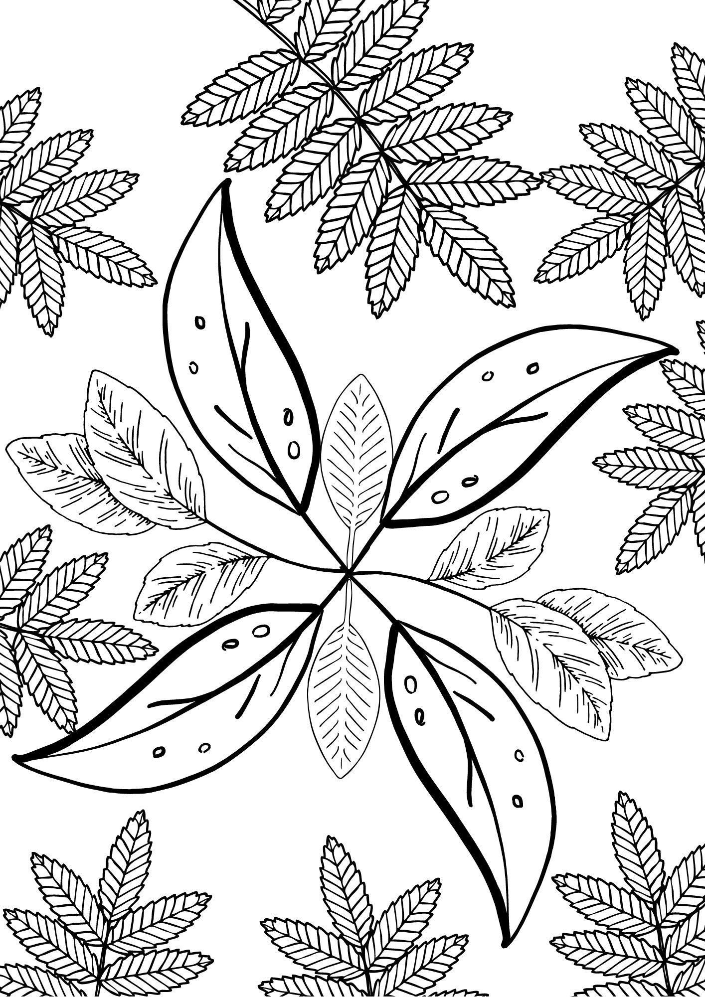 Sligo CTC Blog: Art with Catherine - Mindfulness Colouring