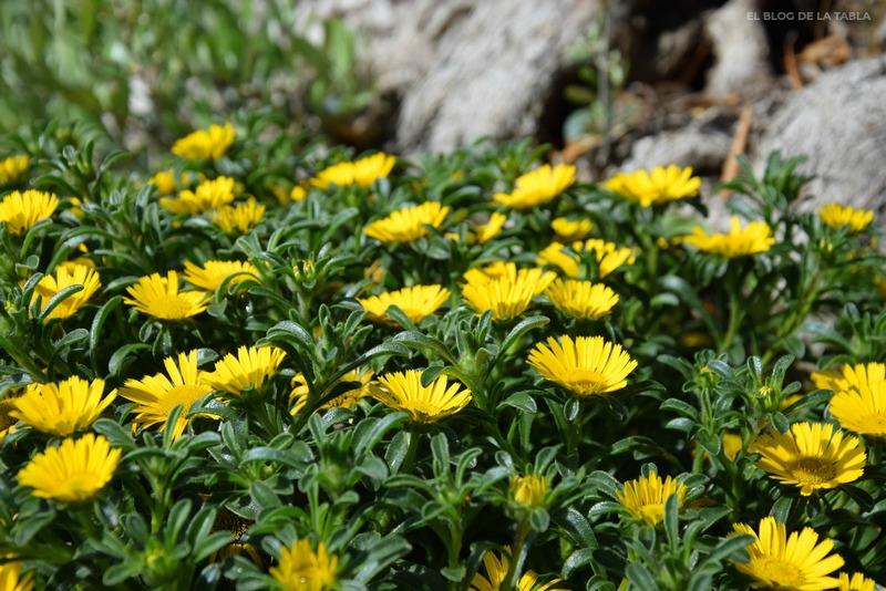 flores color amarillo de plantas mediterráneas