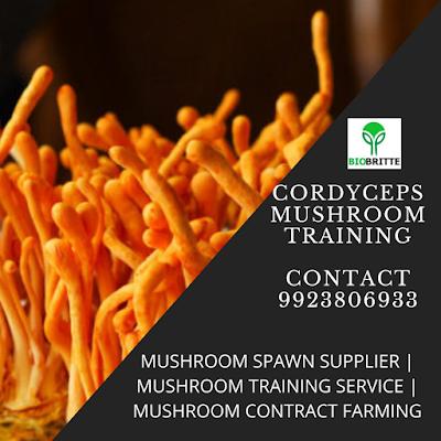 Cordyceps Mushroom Training in Maharashtra