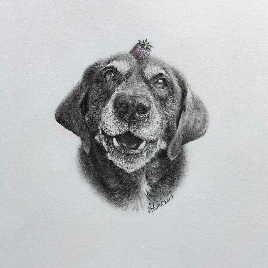 03-Happy-old-dog-new-tricks-Helen-Violet-www-designstack-co