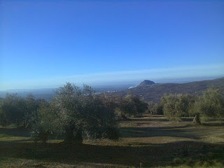 martos and olive groves