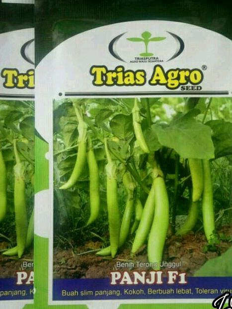 Benih Terong Hijau PANJI F1 Produk Trias Agro Seed