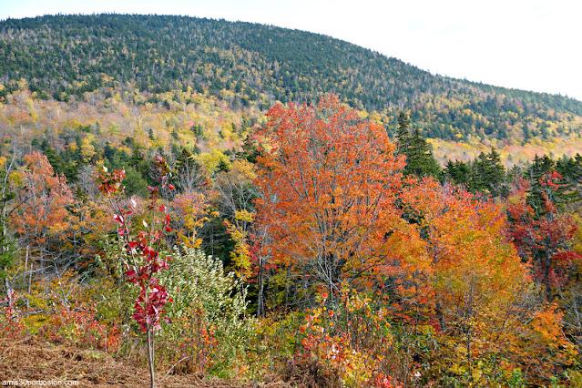 Pasado el Pico del Color en las White Mountain de New Hampshire