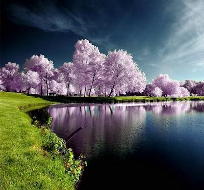 Most Beautiful Nature Photo.