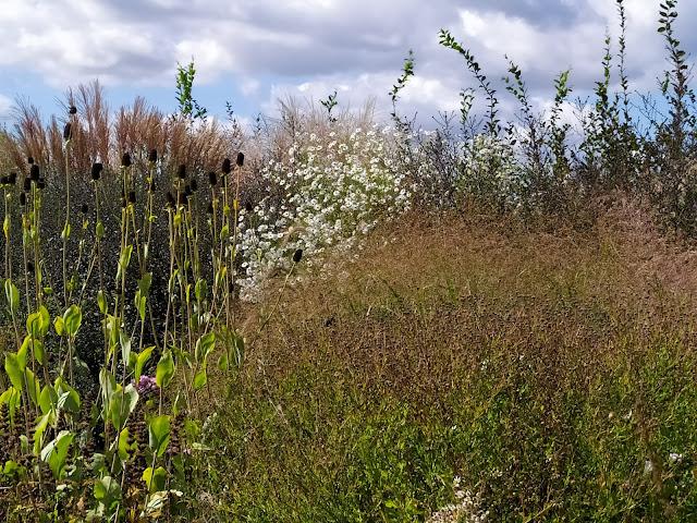 rabata bylinowa, trawy w ogrodzie, rudbekia maxima