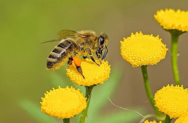 Σώστε τις μέλισσες και τους αγρότες