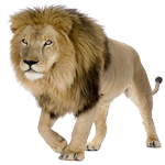lion in spanish