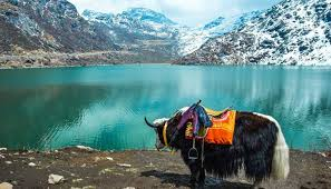 Golden silk wild yak's approximate range of activity