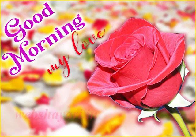 गुड मॉर्निंग गुलाब  गुड मॉर्निंग फोटो फॉर व्हाट्सएप्प