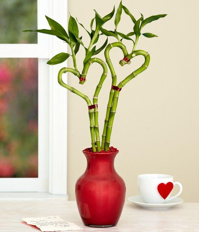 واليوم سنتعرف على نبتة الخيزران أو البامبو وعلى طريقة الاعتناء بهم