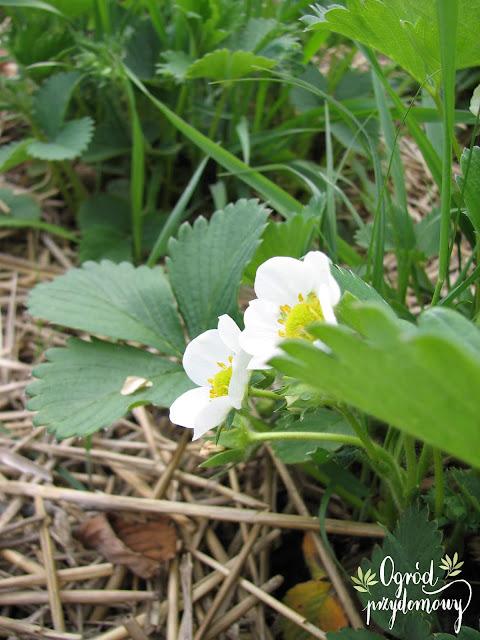 warzywnik w kwietniu, ogród przydomowy
