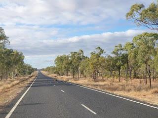 emus, Australian wildlife, outback highway