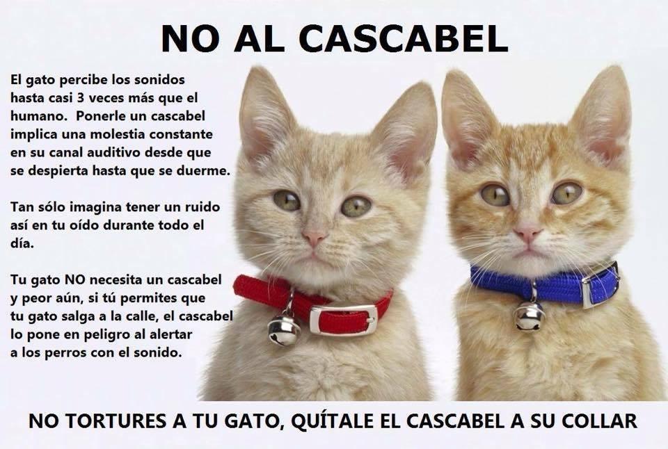 Gatos En Los 225 Rboles No Al Cascabel