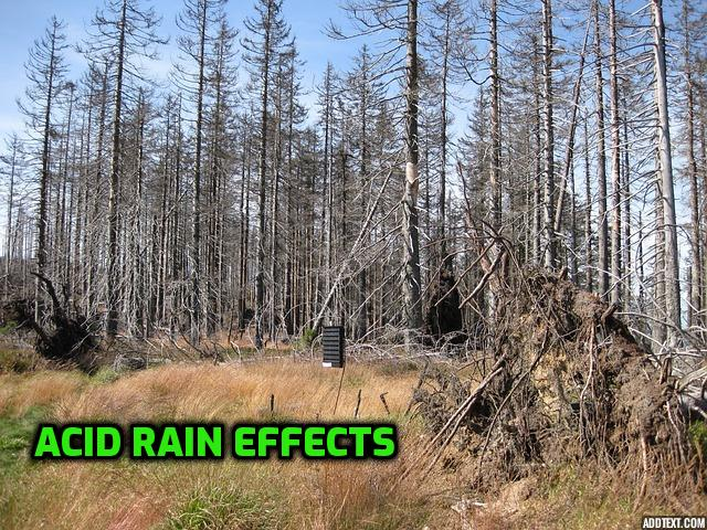Acid rain experiment for science fair projects for 8th grade2