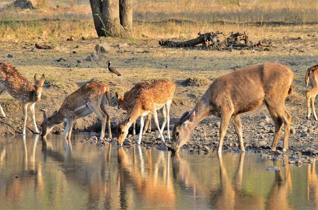Top-5-Wild-Life-Sanctuaries-in-India