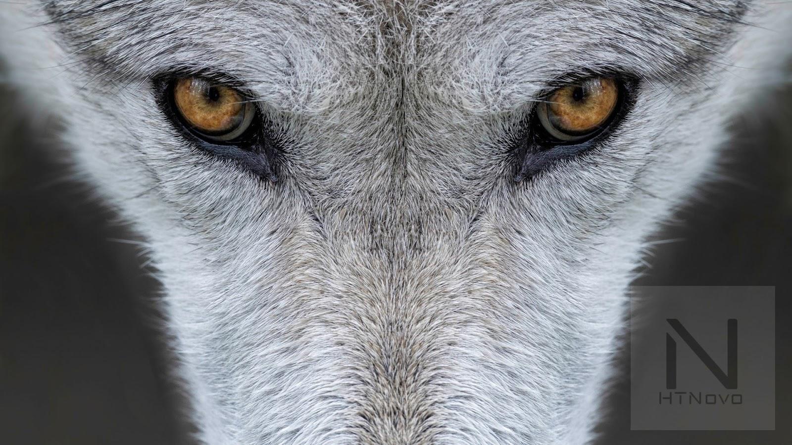 Animals-Yellowstone-Tema-Windows-10-gratis