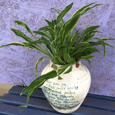 Stiletto Hosta in Old Pottery White Pot
