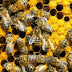 H Δ.Α.Ο.Κ. Πρέβεζας για την μελισσοκομία και τα προγράμματα ενίσχυσης.
