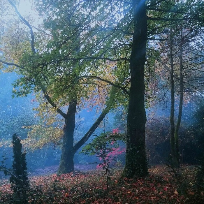 Bosque del Pazo de la Saleta