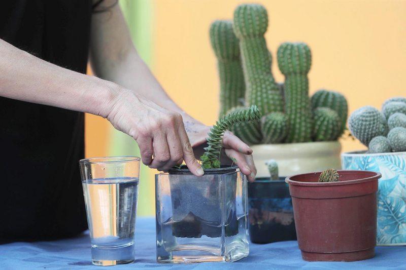 Esta es la mejor forma de regar sus plantas de macetero en su departamento