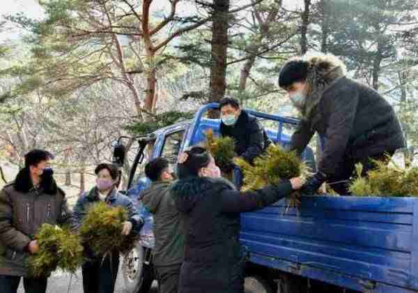 Forest conservation efforts in North Hwanggae Province