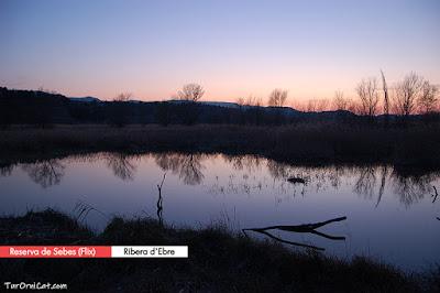 Reserva Natural de Sebes (Flix, Ribera d'Ebre)
