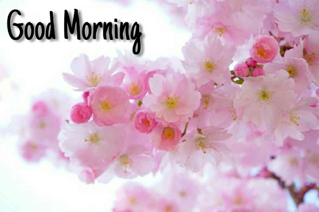 Beautiful good morning images , pics and photos of flowers download