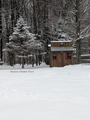 chicken coop in the snow