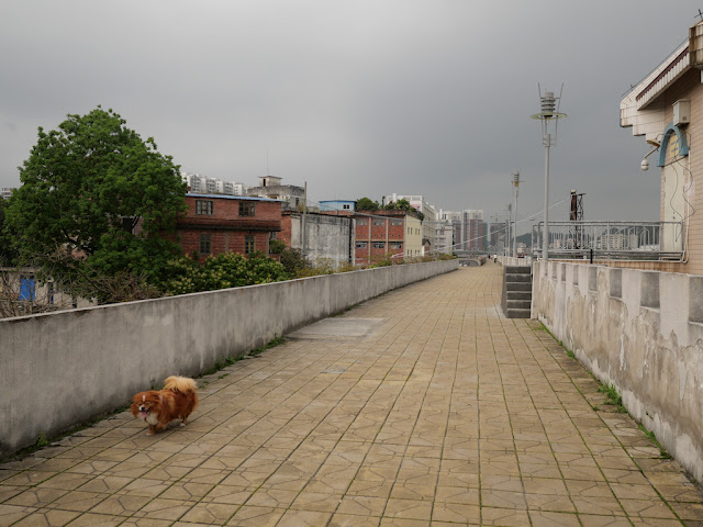 small dog walking on a wall bordering the Gui River (桂江) in Wuzhou (梧州)