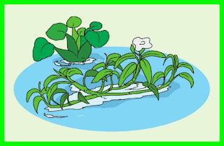 rangkuman materi tema 2 kelas 6 sd tumbuhan hidrofit