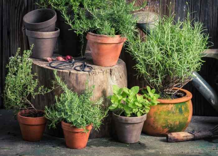Companion Planting for Herbs