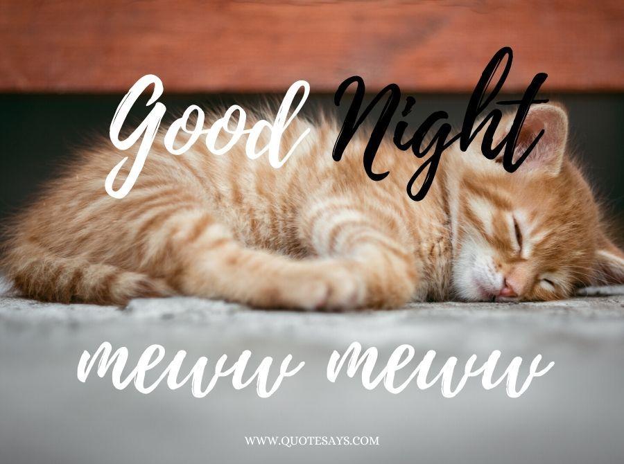 Good Night Little Cute Brown Sleeping Cat
