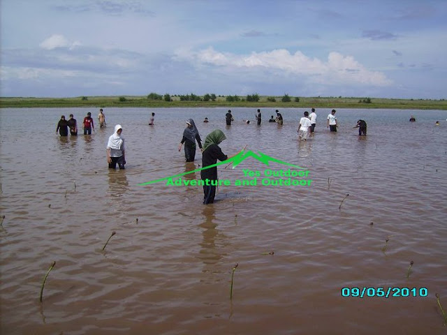Mengupas Rasa Penasaran Hasil Reboisasi Mangrove