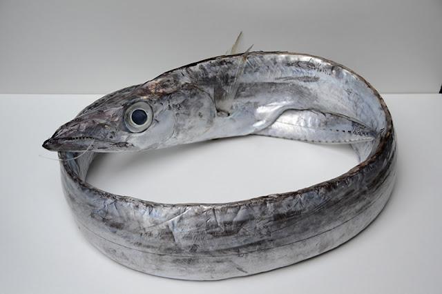 Risultato immagine per poverimabelliebuoni pesce sciabola