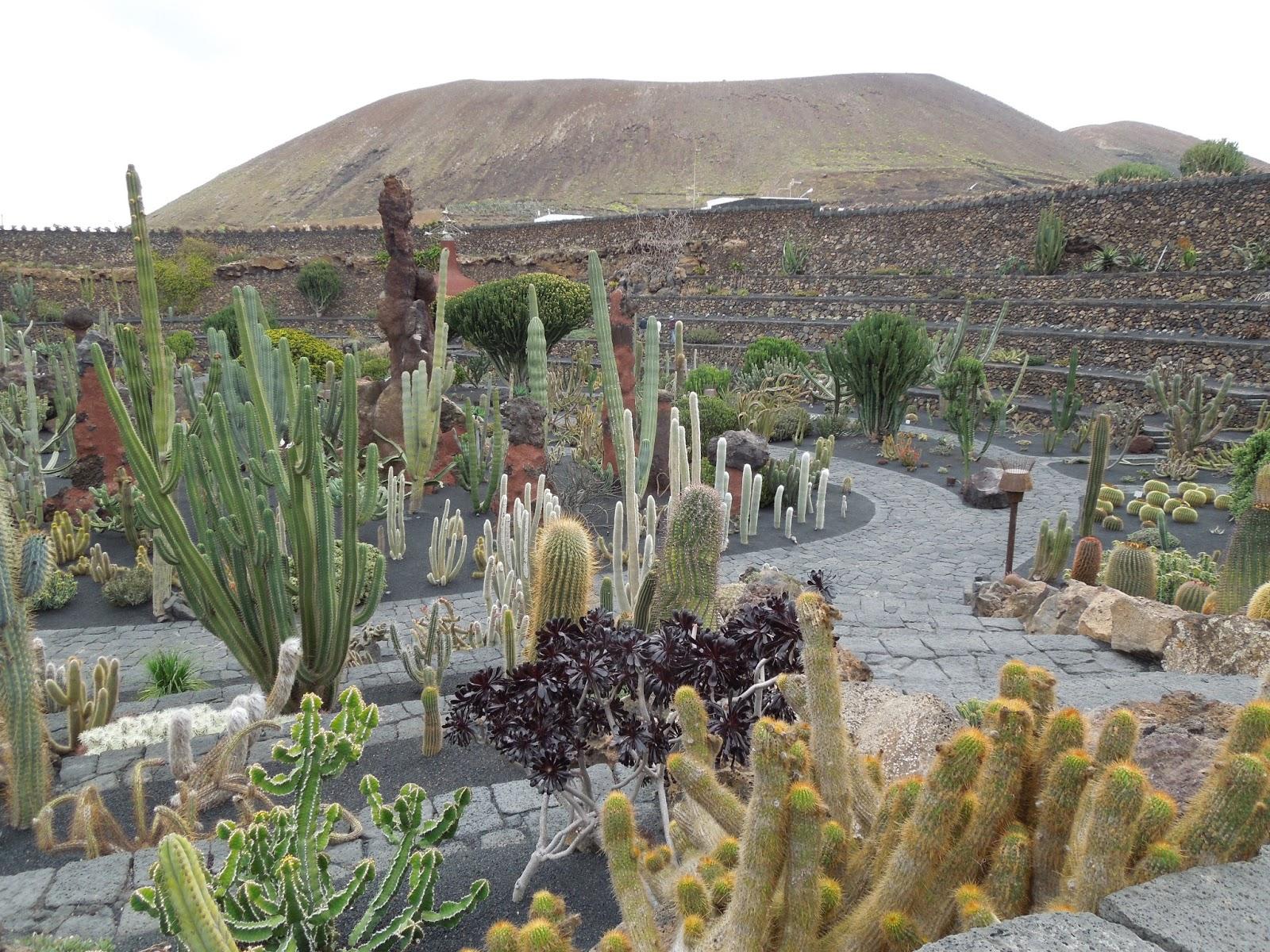 Jard n de cactus de lanzarote opuntias bot nic serrat for Jardin de cactus lanzarote