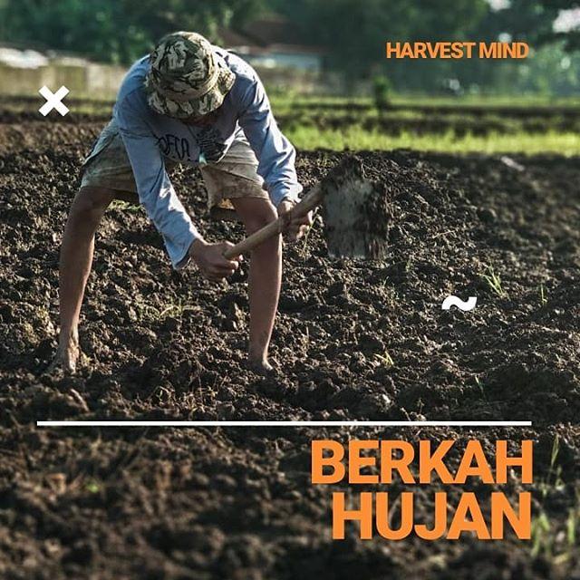 harvest mind