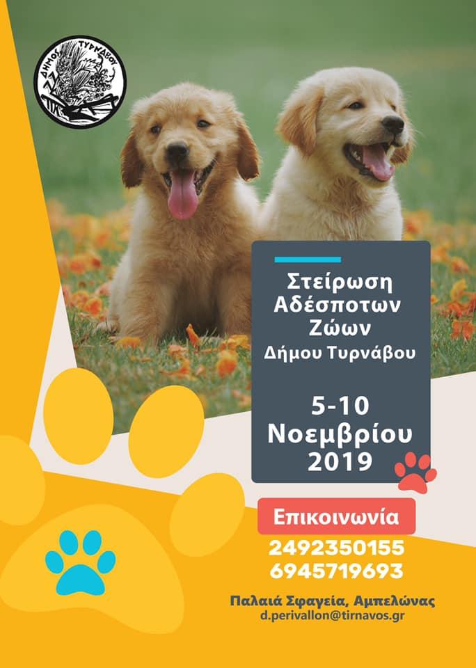 Πρόγραμμα στειρώσεων αδέσποτων ζώων στο Δήμο Τυρνάβου